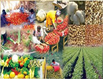 The economic gains of the Plants Varieties Protection Law for Nigeria