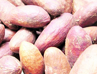 Two bitter kola nuts a day keeps doctor at bay — Expert