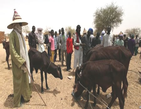 Miyetti Allah, Buhari, election