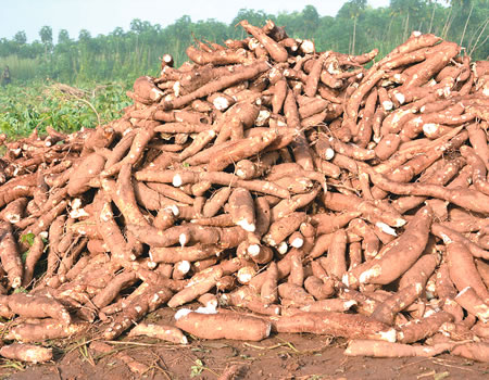 Cassava to ethanol plant to begin operation in Ondo