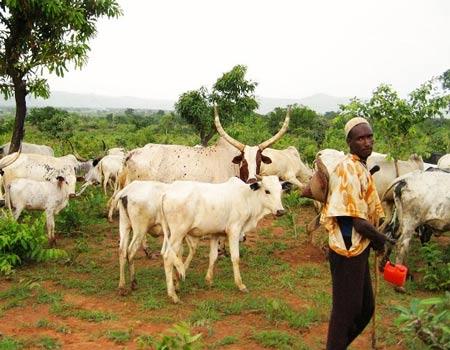 Suspected herdsmen kill two, Herdsmen kill three farmers, Nigerians in Canada fault, Low compliance by herdsmen, fulani herdsmen, Herder-farmer clashes