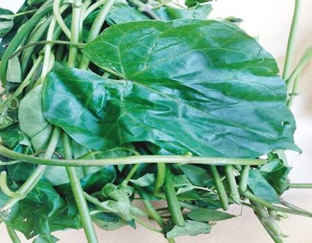 Utazi, best vegetable for diabetes –Scientists » Natural Health