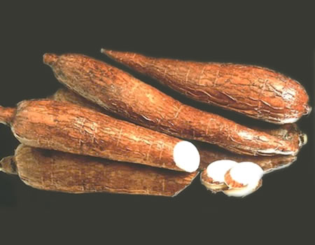 Harnessing the untapped potential of cassava to revamp