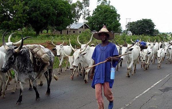 cows, herdsmen, Delta, Addressing herders' crisis