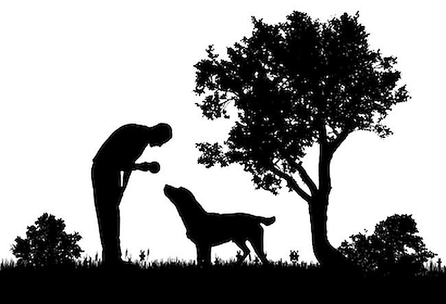 Man's best animal friend