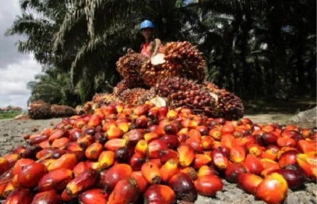 NPPAN to empower youths, dwindling fortunes in oil palm