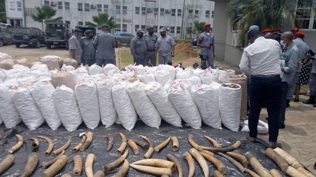 Customs intercept N22.3bn pangolin scales, elephant tusks in Lagos