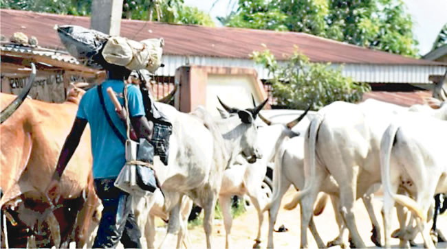 Delta govt not providing land for herders as assembly yet to pass bill on open grazing